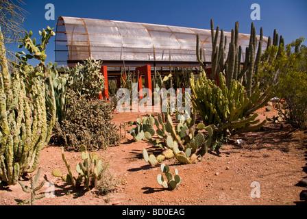 ... Desert Botanical Gardens, Phoenix, Arizona   Stock Photo