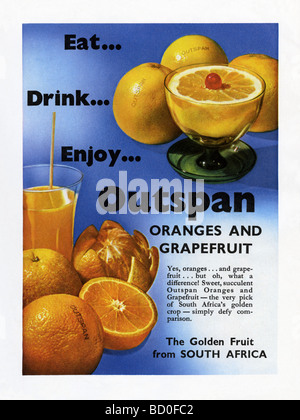 1951 advertisement for Outspan South African oranges and grapefruit - Stock Photo