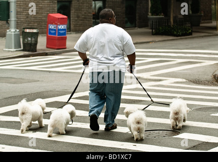 Dog Walker in New York City. 4 dogs. - Stock Photo