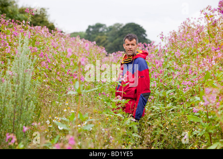 Himalayan Balsam a highly invasive foreign plant that is spreading rapidly in the UK and out competing native flora. - Stock Photo
