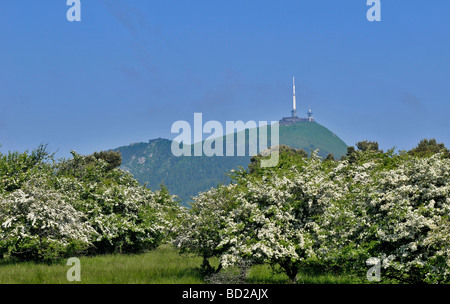 Landscape with hawthorn and Puy de Dôme mountain - Stock Photo