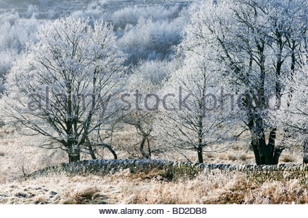 Hoarfrost on trees Gwent Wales UK - Stock Photo