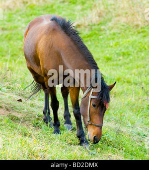 Horse in the field at the Bulgarian countryside - Stock Photo