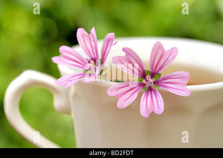 Mallow infusion Malva sylvestris - Stock Photo