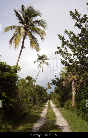 Dirt Road and Palm Trees - Sanibel Island, Florida - Stock Photo