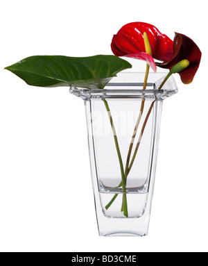 Cut flowers in a vase - Stock Photo