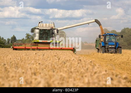 Claas Combine Harvesting Barley In Lincolnshire - Stock Photo