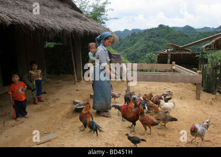 Nong Het, Xieng Khouang province, Laos, 2006.  A young mother feeds the chickens with her baby on her back. - Stock Photo