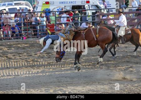 Bucking Bronco Cowboy Falling Off Rodeo Horse Falkland