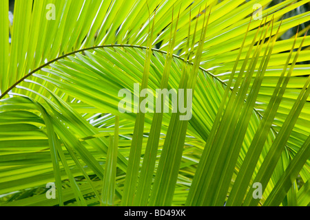 Palm frond details ideal for a jungle background - Stock Photo