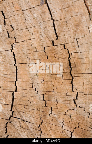 Detail of tree rings in the cross-section of a tree trunk - Stock Photo