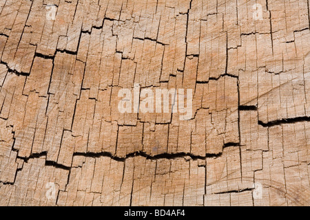 Tree rings in a closeup cross-section of a tree trunk - Stock Photo