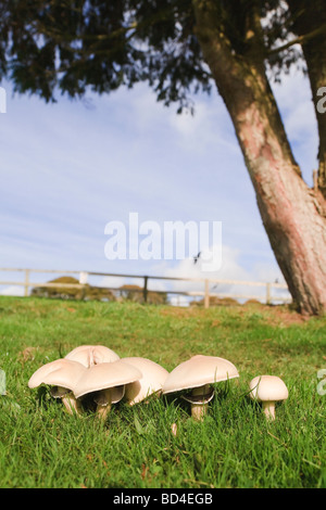 how to stop mushrooms from growing in lawn