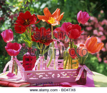 Red tulips in small glass bottles on pink tray - Stock Photo