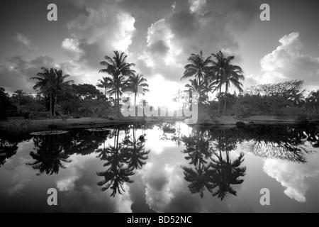 Pond with reflecting palm trees and garden at Na Aina Kai Botanical Gardens Kauai Hawaii - Stock Photo