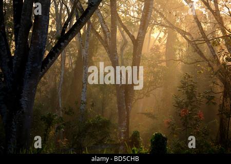 Early morning mist near Cana field station in Darien national park, Republic of Panama. - Stock Photo