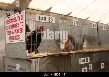 Poultry in cages at the Bakewell Show, Bakewell, Derbyshire, England, U.K. - Stock Photo