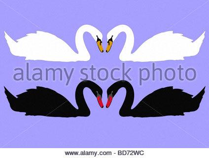 swans necks making heart shape - Stock Photo