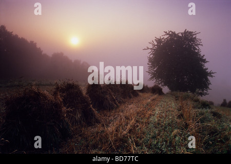 Poland country organic farm mist fog Stock Photo