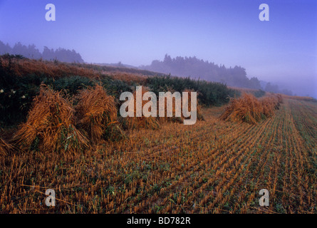 stubble harvest straw organic farm country Poland Stock Photo