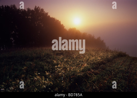 Meadow Organic Farm Fog Mist Poland Country Stock Photo
