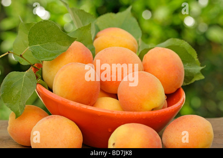 Apricots in natural background - Stock Photo