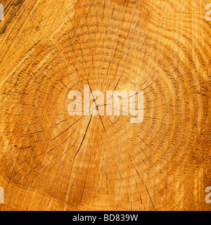 Growth rings on a cut tree trunk. - Stock Photo