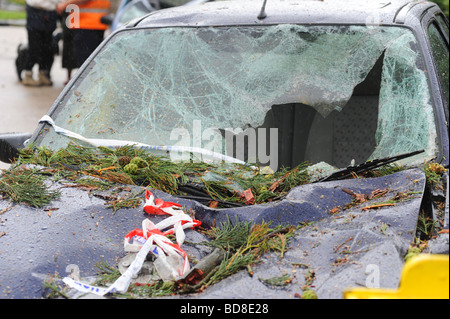 Damage done to a car after a tree fell on top of it after being struck by lightning during a severe summer storm - Stock Photo
