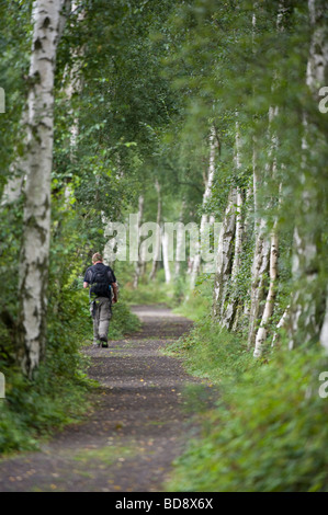 Man walking in birch line path Potteric Carr Yorkshire Wildlife Trust southeast off Doncaster South Yorkshire England - Stock Photo