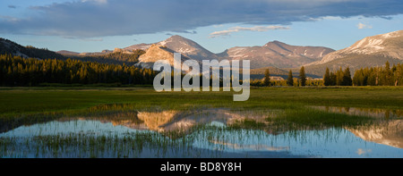 Reflection of Mount Dana in flooded field Tuolumne Meadows Yosemite national park California - Stock Photo