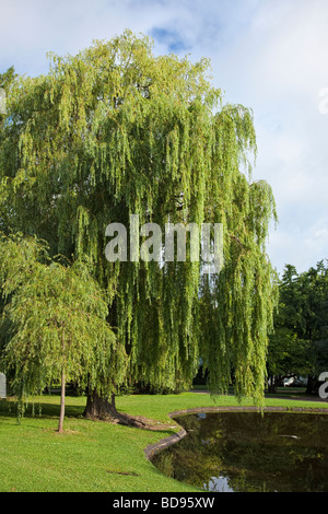 Weeping willow tree and duck pond in an urban park - Stock Photo