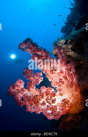 Healthy rich soft coral photographed in Philippines using a different lighting technique. - Stock Photo