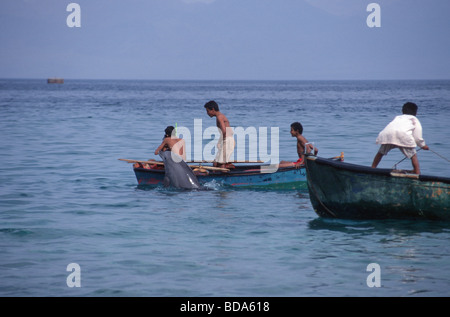 Young man in rowboats interacting with a solitary sociable bottlenose dolphin Tursiops aduncas named Holly in Nuweiba, - Stock Photo