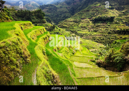 Rice terraces in Banaue Ifugao Province Northern Luzon Philippines - Stock Photo