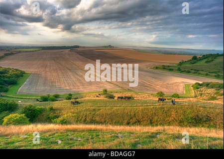 Walkers and cattle in the Vale of Pewsey. A view from a National Nature Reserve over the largest arable field in - Stock Photo