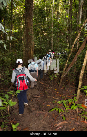 Indonesia Sulawesi Operation Wallacea sixth form students walking through forest on muddy path - Stock Photo