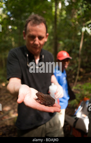 Indonesia Sulawesi Operation Wallacea teacher showing students toad during forest walk - Stock Photo