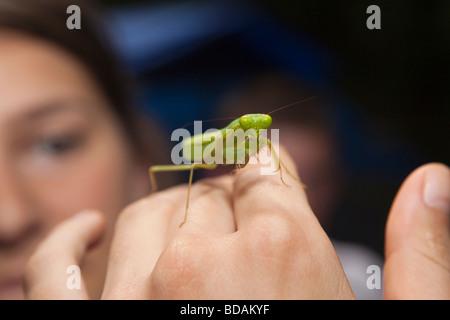 Indonesia Sulawesi Operation Wallacea Lambusango forest reserve praying mantis on students hand - Stock Photo