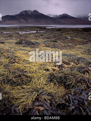 Shoreline of Loch na Keal looking towards Ben More, Isle of Mull, Argyll, Scotland, UK. - Stock Photo