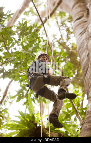 Indonesia Sulawesi Operation Wallacea Lambusango forest reserve canopy access student high in tree - Stock Photo