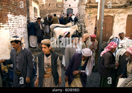 The donkey market located in an alleyway in the traditional souq of Old Sana'a, Yemen - Stock Photo