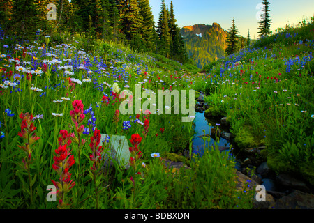 Wildflowers lining a creek along Naches Peak trail in Mount Rainier National Park - Stock Photo