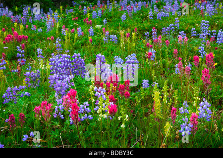 Summer wildflowers in the Sunrise area of Mount Rainier National Park - Stock Photo
