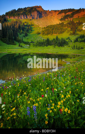 Summer wildflowers at Tipsoo Lake in Mount Rainier National Park - Stock Photo