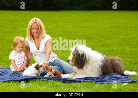 Woman with daughter Bobtail Chihuahua and Mixed Breed Dog puppy Old English Sheepdog - Stock Photo