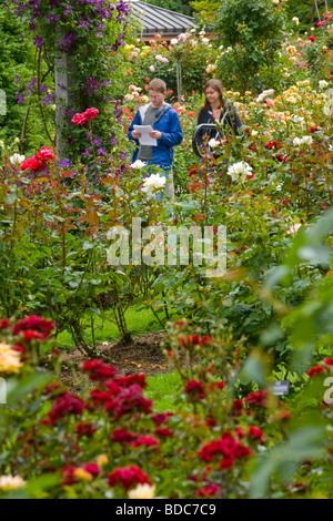 International Rose Test Garden, Portland, Oregon, USA Stock Photo ...
