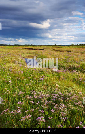 A summer evening showing the Saltmarshes near Burnham Deepdale on the North Norfolk Coast - Stock Photo