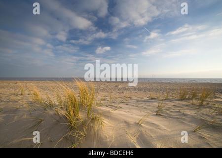 Marram Grass, Gt Yarmouth Beach, Norfolk, UK - Stock Photo