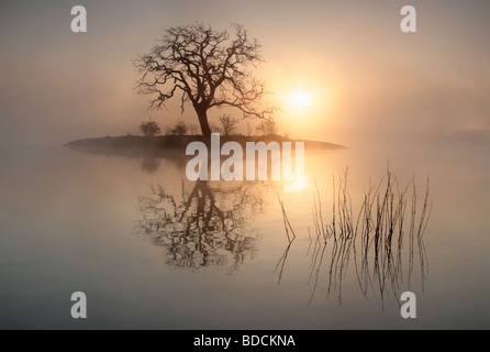 An early morning photograph of a lone tree isolated on an island with the sun behind. - Stock Photo
