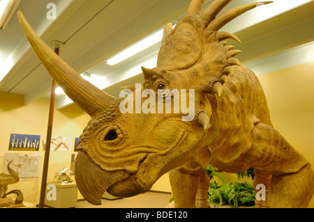 Styracosaurus dinosaur is a short-frilled CERATOPSIAN at The Dinosaur Museum in Blanding, Utah, USA. This is a model. - Stock Photo